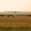 Ballooning over the Maasai Mara, Kenya