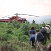 Gorilla trekking in Bwindi Impenetrable Forest, Uganda, in the AS350 B3