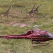 AS350 B3 in Maasai Mara