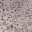 Lake Logipi, Kenya