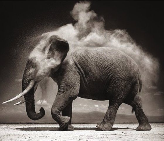 Book cover, elephant