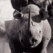 National Geographic Magazine on Rhino Wars