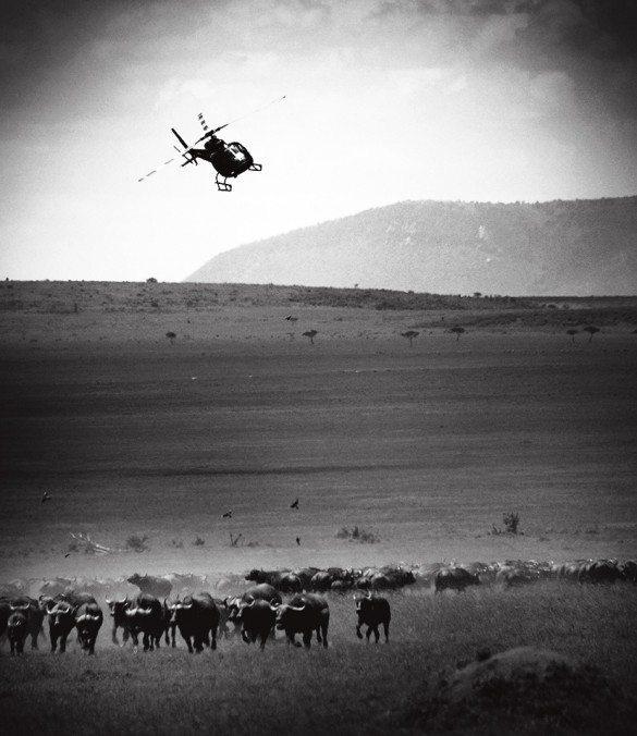 Great Migration, Kenya, Predators, Wildlife, Wildebeest, Zebra, Tanzania, East Africa, Maasai Mara, Serengeti, Safaris, Lady Lori, Helicopters, Hot Air Balloons, Adventure, Holidays