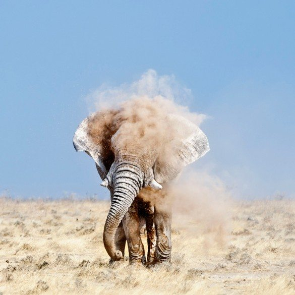 the godfather, elephant, Peter Delaney, National Geographic Photo Contest, dust, elephant in dust, africa