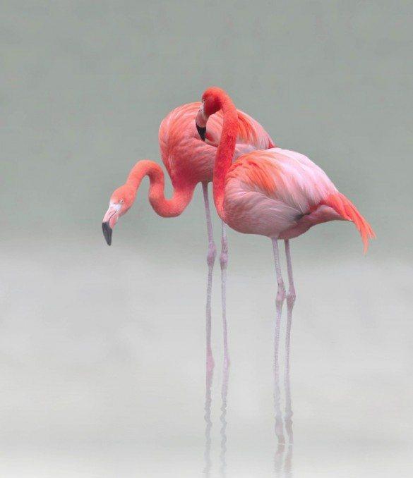 Anna Cseresnjes, flamingo, pink flamingo
