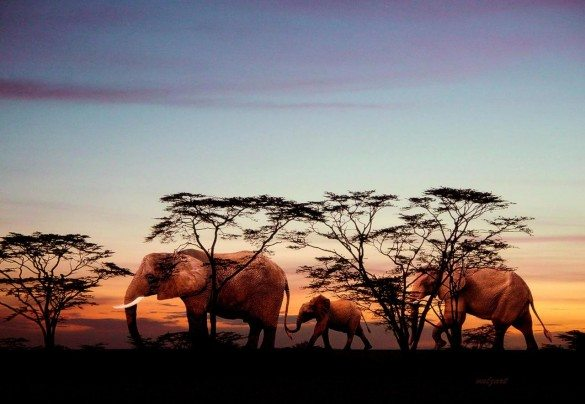 the elephants, valerie anne kelly, photography, africa, african elephant, sunset