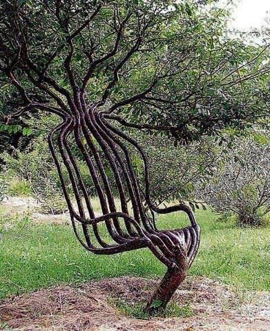 tree chair, african tree, tree, natural growth, growth direction